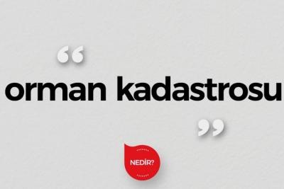 Orman Kadastrosu